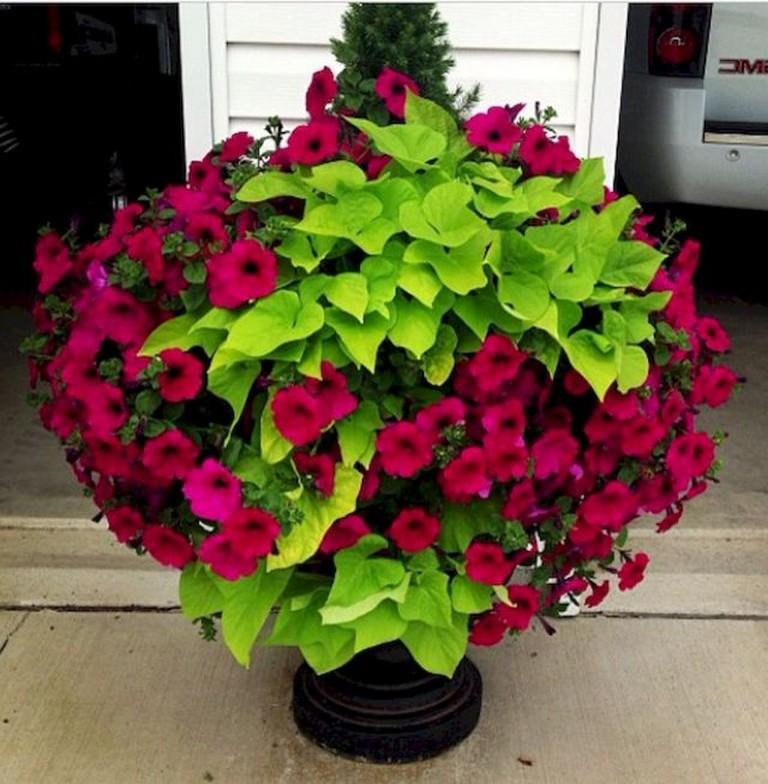 Beautiful Container Gardening Ideas: 45+ Beautiful Container Gardening Ideas